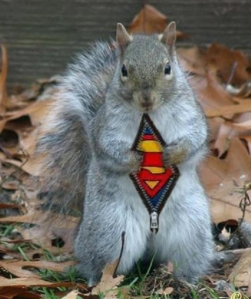 superman-squirrel-nb19571