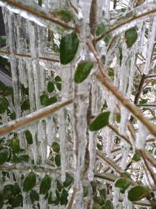 icy days in March 2